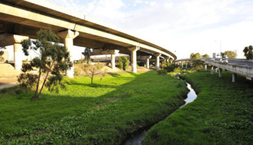 Moonee Ponds Creek landscape